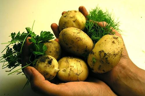 7 foods even food safety experts wont eat ecokaren