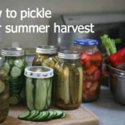 pickle veggies by ecokaren