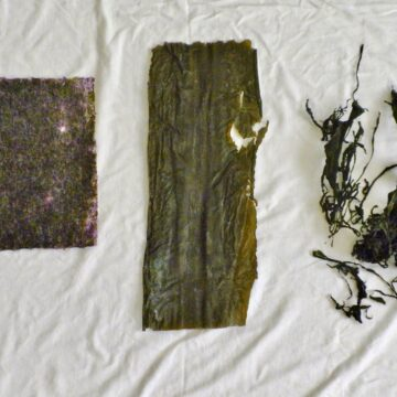 various dried seaweed on white background